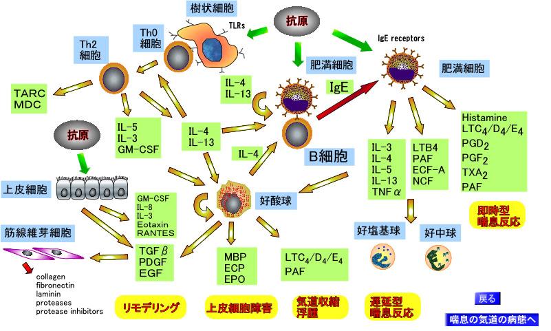 サイトカインネットワークwww.m.chiba-u.ac.jp.jpg