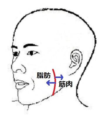 小顔脂肪筋肉.jpg