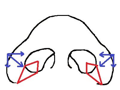 鼻模式図内側法.jpg