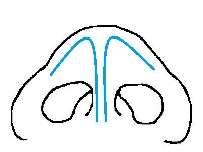 鼻翼軟骨下から.jpg
