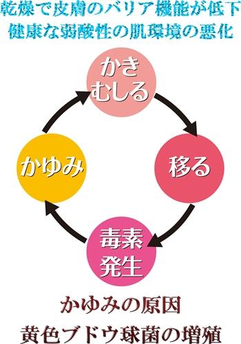 kayumi_circle3ss.jpg